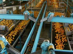 Empresas de suco de laranja de Matão lideram contratações (Foto: Reprodução EPTV)