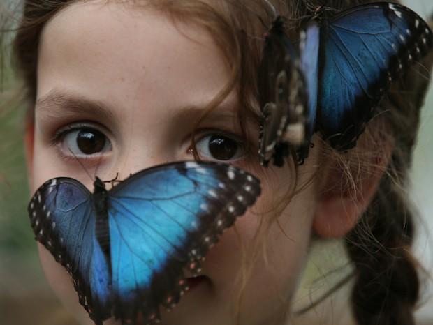 Exposição 'Borboletas Sensacional' é realizado no Museu de História Natural de Londres, na Inglaterra (Foto: Alastair Grant/AP)