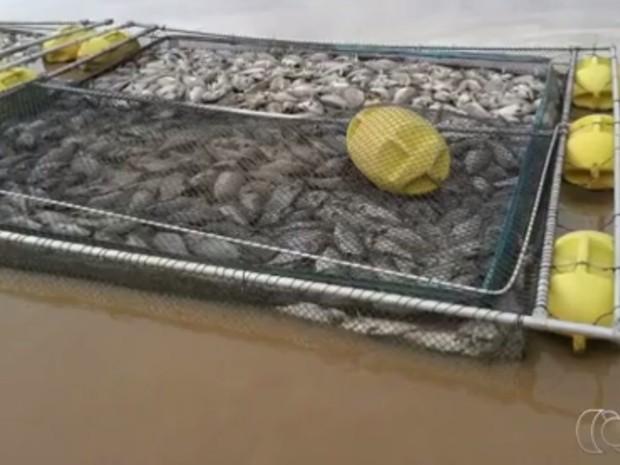 Peixes são encontrados mortos no Lago Serra da Mesa, em Goiás (Foto: Reprodução/ TV Anhanguera)