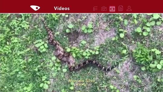 Homem encontra cobra no quintal de casa pela 7ª vez e recolhe animal por conta própria, em Vitória