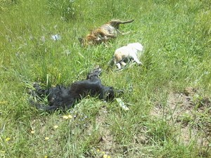 Centenas de cães e três gatos foram encontrados mortos em Bom Jesus (Foto: Divulgação/Polícia Civil)