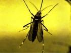Dez pessoas são contaminadas por vírus da zika no DF, diz Saúde