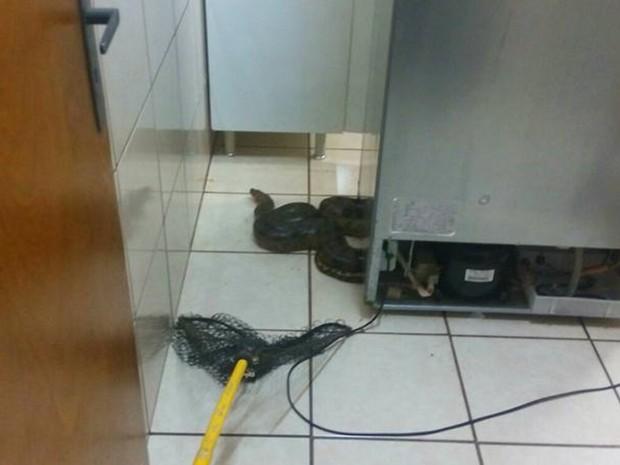 Cobra foi encontrada no motor da geladeira (Foto: Reprodução / Site VotuNews)