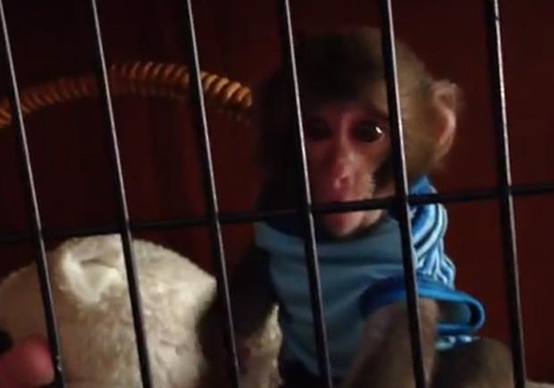 Darwin aparece com camiseta azul listrada em sua jaula, antes de dar um 'beijo' em Yasmin (Foto: Reprodução)