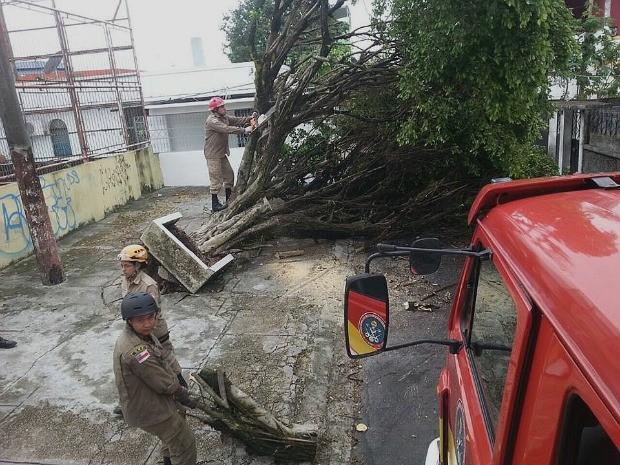 Chuva derrubou árvores, em Manaus (Foto: Divulgação/ Corpo de Bombeiros)