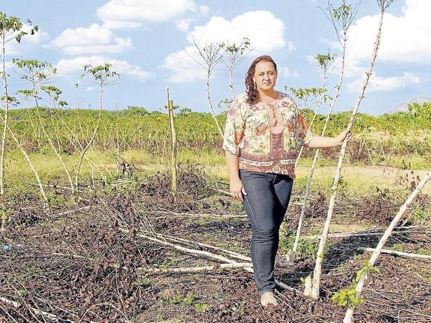 Seca afeta produção de café conilon no Espírito Santo (Foto: Raquel Lopes/ A Gazeta)