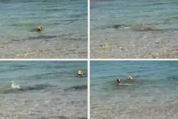 Cachorro foi filmado atacando um tubarão na cidade australiana de Broome. (Foto: Russell Hood-Penn/Reuters)