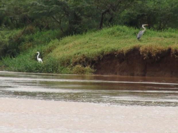 Distrito de Tanquan em Piracicaba, conhecido como pantanal paulistano (Foto: Nikolas Capp/ G1)