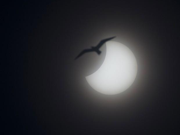 Imagem dá impressão que pássaro está próximo ao eclipse solar desta sexta-feira (20). Imagem foi feita em Nice, na França (Foto: Lionel Cironneau/AP)