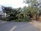 Bairro de Piracicaba fica 24 horas sem energia elétrica após chuva e ventos