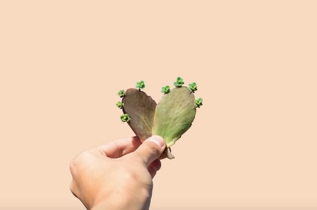 Estúdio australiana brinca com suculentas em novo projeto visual (Foto: Divulgação)