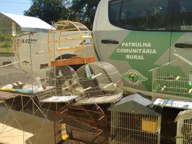 Pássaros foram soltos em reserva ambiental (Foto: Divulgação / Polícia Ambiental)