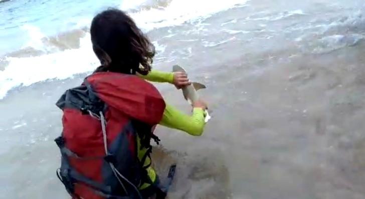 Turista tubarão 2