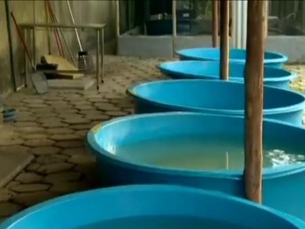 Enfermaria de tartarugas trata animais feridos, no ES (Foto: Reprodução/ TV Gazeta)