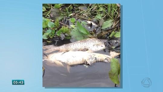 Começa período da decoada em rios do Pantanal de MS