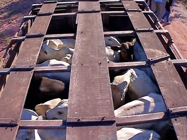 Quadrilha era investigada por roubo de gados e defensivos agrícolas em fazendas de MT. (Foto: Reprodução/TVCA)