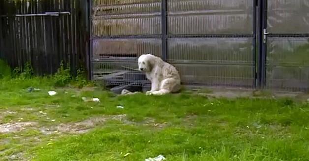 O sheepdog que espera pelo dono há cinco anos (Foto: Reprodução/YouTube)