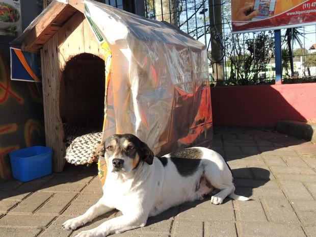 Cão vira lata Nininho, que pertence à dona da banca de jornal e tem casinha ao lado da banca. (Foto: Pedro Carlos Leite/G1)