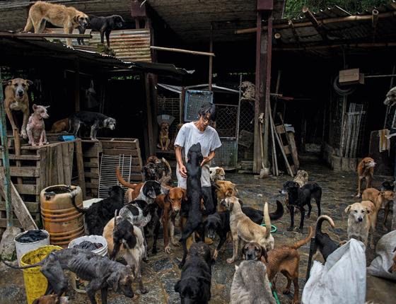 A aposentada Maria de los Angeles,55 anos cuida de um abrigo para cachorros ,num  subúrbio de  Caracas.O numero de animais abandonados  se multiplicou por causa da crise (Foto:  Manaure Quintero/ÉPOCA)