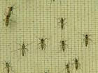 MPF convoca municípios da região para explicar ações contra dengue