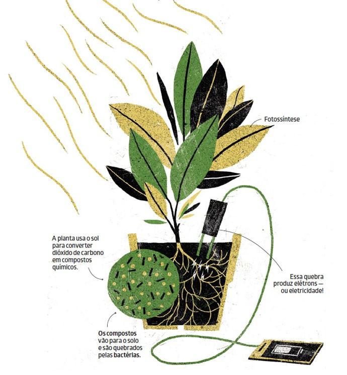 Projeto capta energia da fotossíntese das plantas para carregar celulares