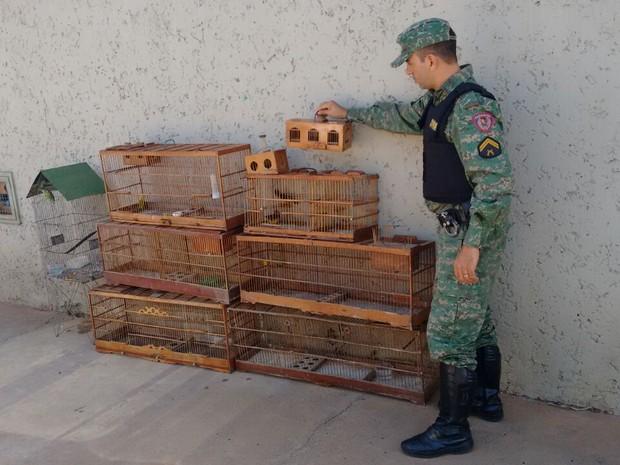 Pássaros apreendidos na rua  (Foto: Polícia Militar/Divulgação)