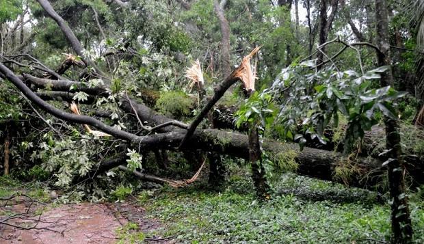 fotos jardim botanico porto alegre : fotos jardim botanico porto alegre:Árvores tombaram no Jardim Botânico, em Porto Alegre (Foto: Ricardo