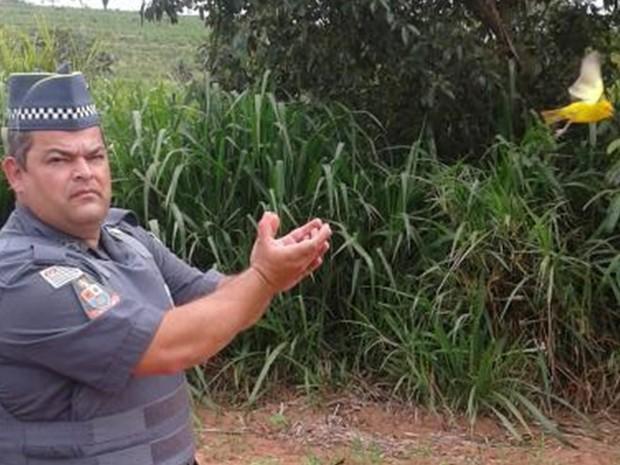 Pássaros foram soltos na natureza (Foto: Divulgação/Polícia Ambiental)
