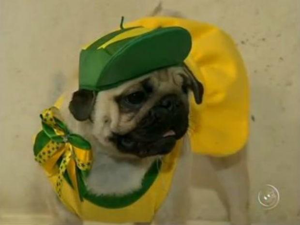 Pets recebem pinturas verde-amarelo durante a Copa (Foto: Reprodução/TV TEM)