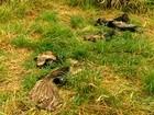 Animais silvestres de parque em GO estão na mira de caçadores