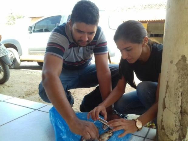 Fiscais da Cogerh coletaram amostras de peixes com larvas (Foto: Alex Santana/Iguatu.net)