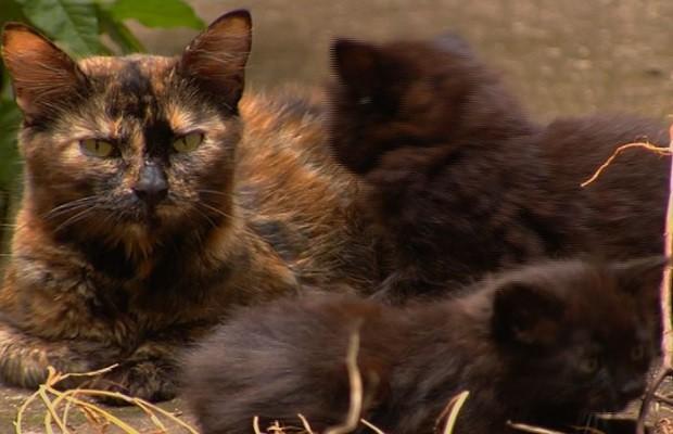 Síndico captura gatos em 'gaiola' e causa polêmica em prédio de Goiânia, Goiás (Foto: Reprodução/TV Anhanguera)