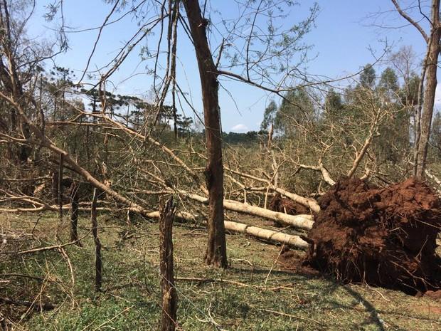 Com a força do vento, árvores foram arrancadas pela raiz (Foto: Divonei Ravanello/RPC)