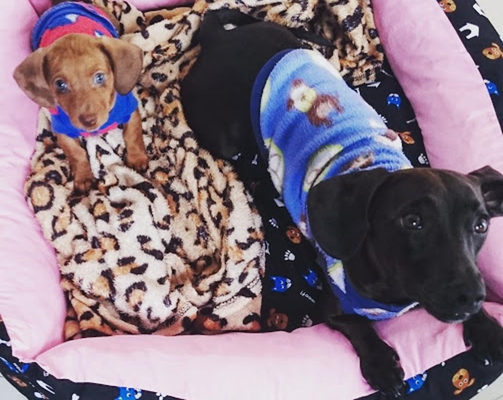 Roupas e cobertores ajudam a manter animais aquecidos (Foto: Neto Dutra/Arquivo pessoal)