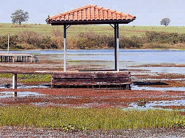 Plantas aquáticas dificultam acesso a ranchos de Miguelópolis, SP (Foto: Reprodução EPTV)