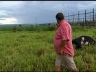 Duas vacas morrem após fio de alta tensão se romper em chácara de GO