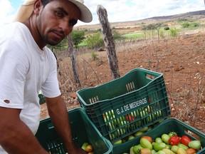 O agricultor Odair Gomes mostra seus tomates. Com a seca, ele usa água salobra no cultivo na zona rural de Santa Cruz (Foto: Luna Markman/G1)