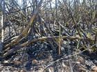 Justiça Federal determina suspensão das queimadas na região de Limeira