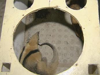 Tamanduá é encontrado por cães no quintal de uma casa em Paulista, PE (Foto: Reprodução / TV Globo)