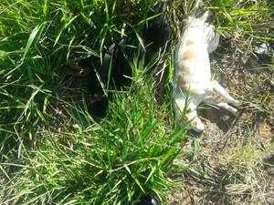 Animais foram encontrados pela Polícia Militar em vicinal de Matão (Foto:  Maury Jr./Matão Urgente)