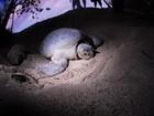 Zoológicos de Nova York vão proteger tartarugas em risco de extinção