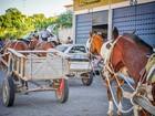 Prefeitura sanciona lei que proíbe carroças nas ruas de Taubaté, SP