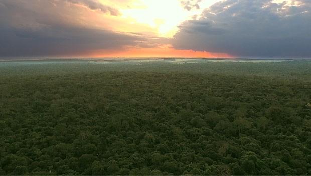 Meu Paraná a beleza da Floresta das Perobas (Foto: Reprodução/RPC)