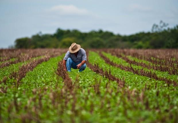 Agricultura ; agronégocio ; crédito rural ; agricultura de subsistência ; fazenda ; plantio ; plantação ;  (Foto: Divulgação)