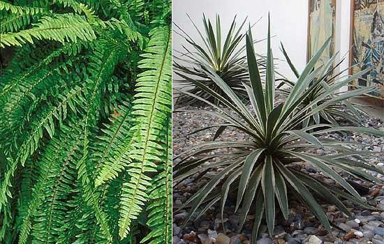 Samambaia e agave (Foto: Evelyn Müller)