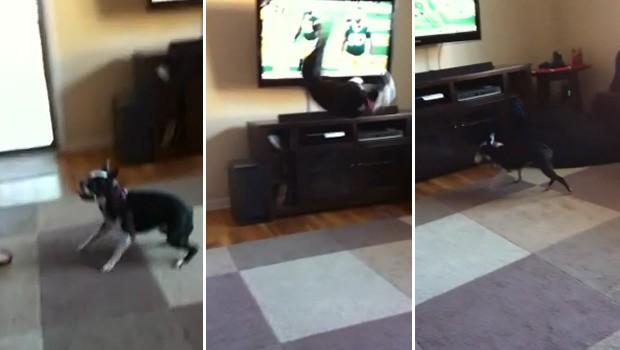 Cadela consegue pegar a bola durante salto mortal para trás (Foto: Reprodução)