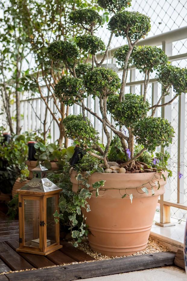 jardim vertical vasos meia lua : jardim vertical vasos meia lua: tem jardim vertical e frutíferas – Casa e Jardim