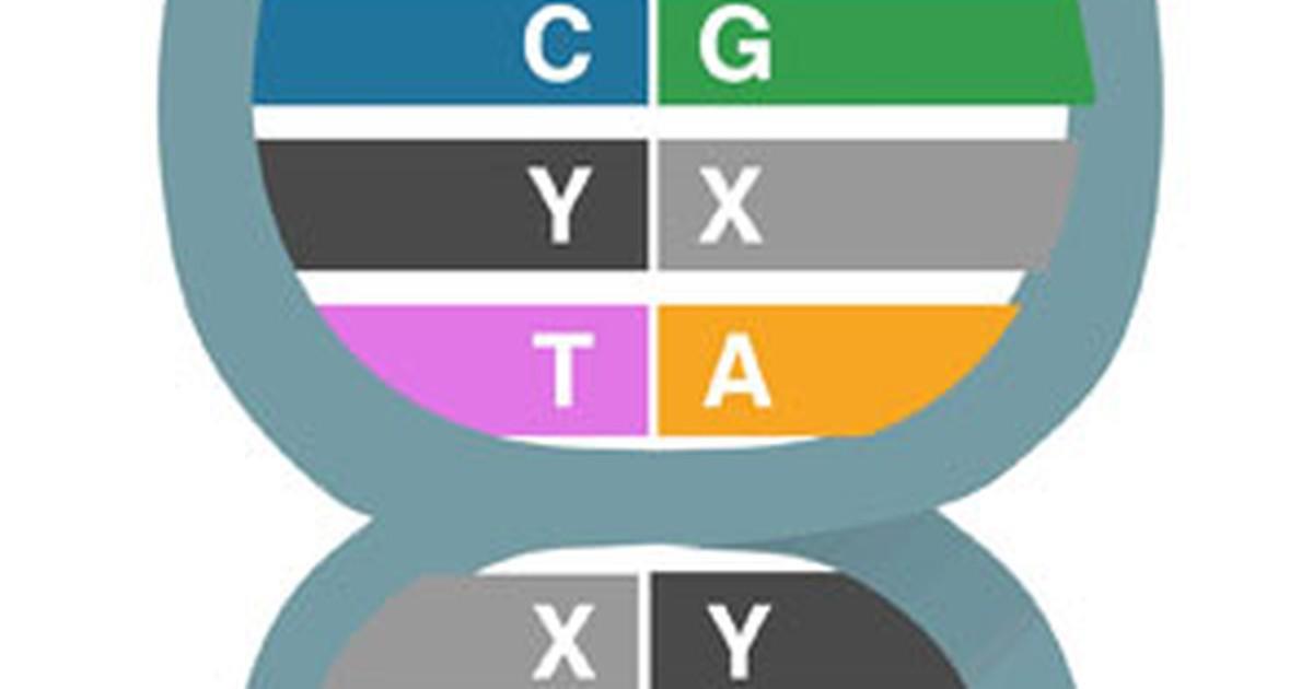 Cientistas adicionam 'letras' artificiais ao código genético do DNA