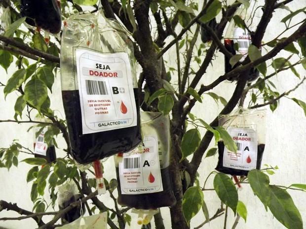 Estudantes colocam bolsas de sangue em árvore para estimular doação em Santos, SP (Foto: Ivair Vieira Jr/G1)