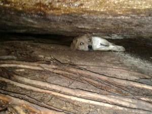 Cachorra ficou presa em fenda entre duas pedras (Foto: Corpo de Bombeiros de Balneário Camboriú/Divulgação)